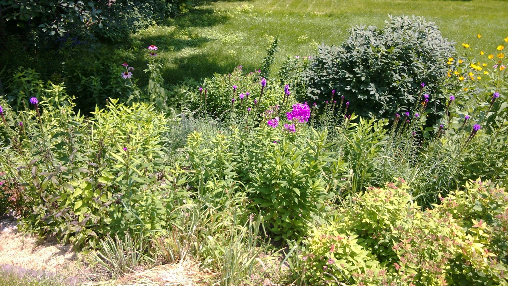 Residential Native Garden in Backyard