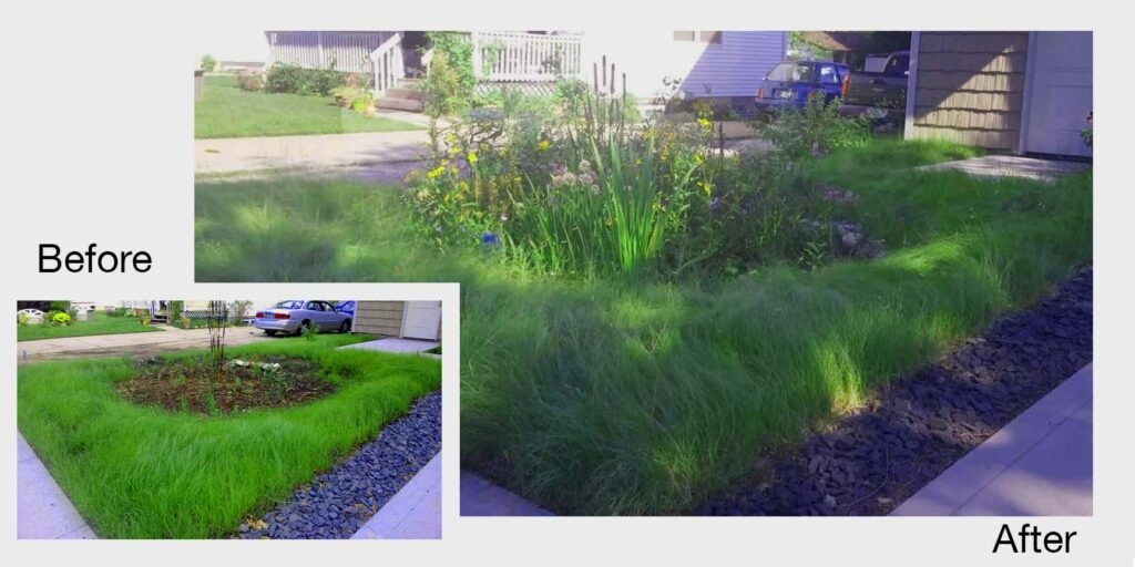 before and after native lawnscape