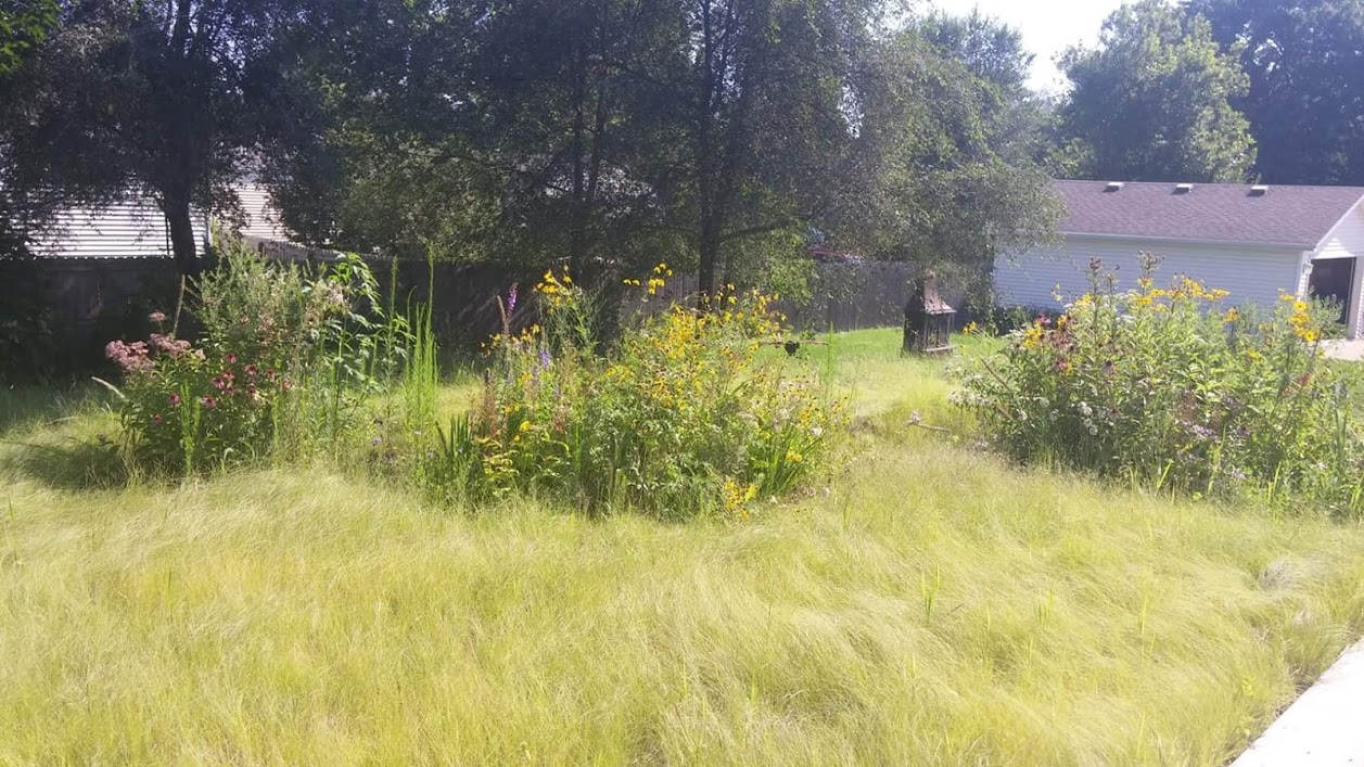 backyard prairie 2