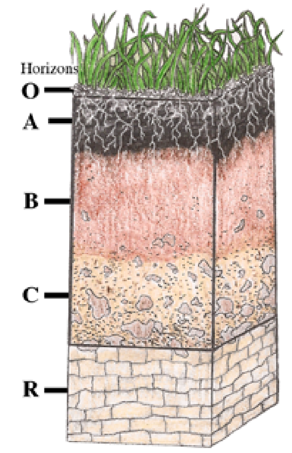 different levels of soil
